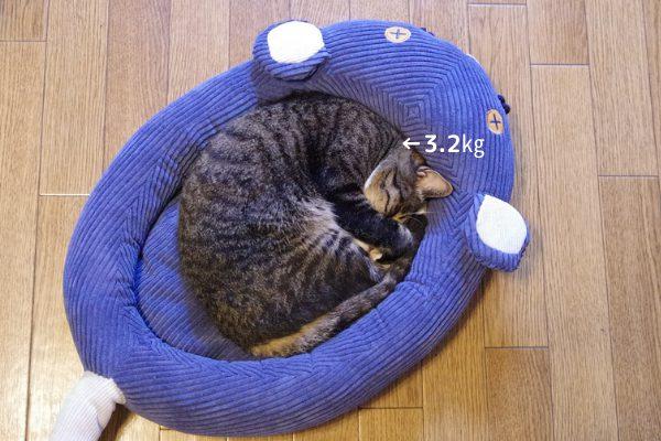 フェリシモ猫部のネズミさんベッドで丸くなって寝ている3.2㎏の成猫。