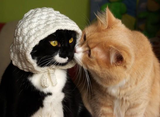 猫 問題解決