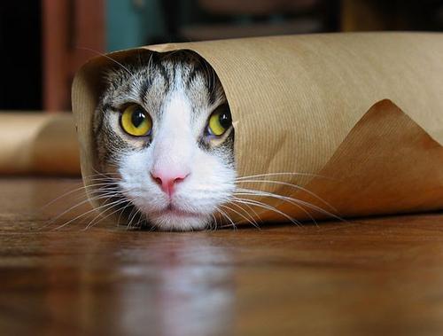 猫を初めて動物病院へ連れていく!スムーズに受診できる2つのポイント。