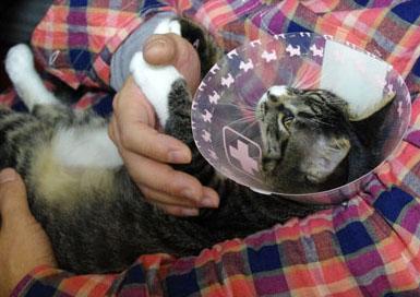 猫カビ 治療方法 薬