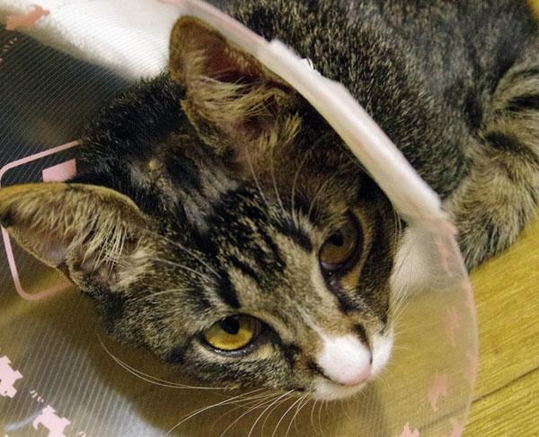 猫カビ 症状