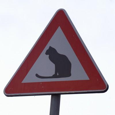 猫標識60