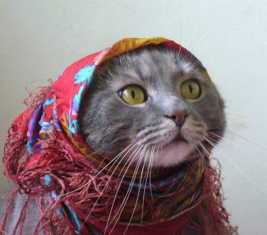 【完治した!】猫カビ(皮膚糸状菌症)症状発生から人への感染、治療法まで写真で具体的に解説