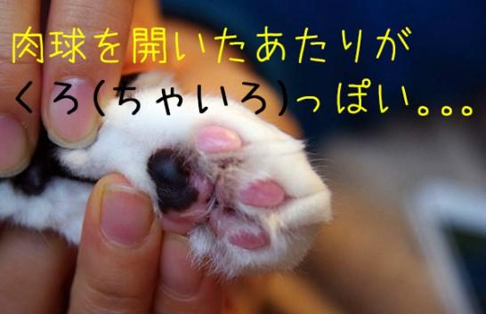 猫・手のひらが黒いっ!と思ったら、指間炎でした。