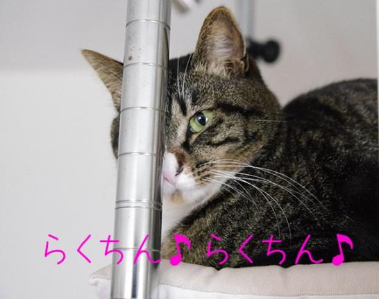 ルミナスで自作したキャットタワー最上段でくつろぐ猫。