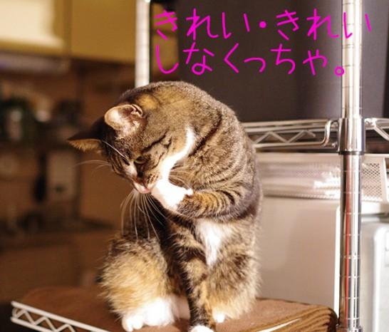 スチールラック自作キャットタワーでの猫の様子