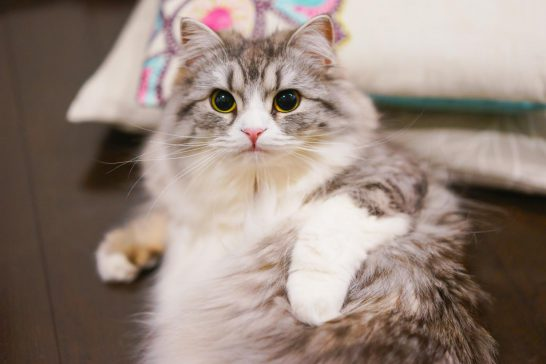 猫カビ 掃除方法 対策