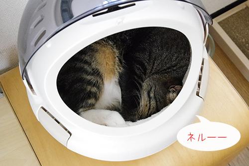 コロルおでかけネコベッドで猫が丸くなって寝ている様子