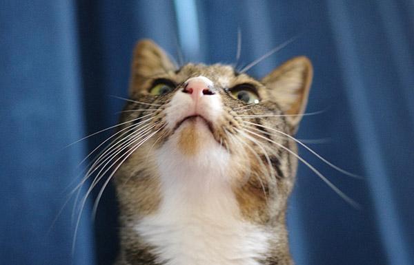 完全室内飼い猫の病気・しつけ