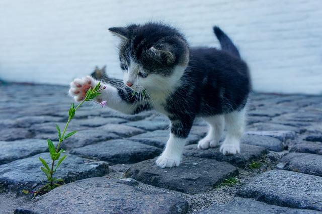【病気・しつけ】猫が実際にかかった症状と治療法、人間とうまく共生するための方法まとめ