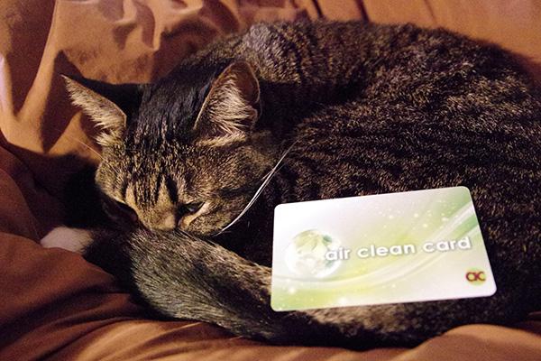 マイナスイオンを発生させる除菌カードエアークリーンカードのペットへの効果