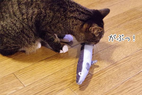 USEDo × 猫部 古着屋さんで見つけたような味わい深いデニムさかなの会をくわえる猫。