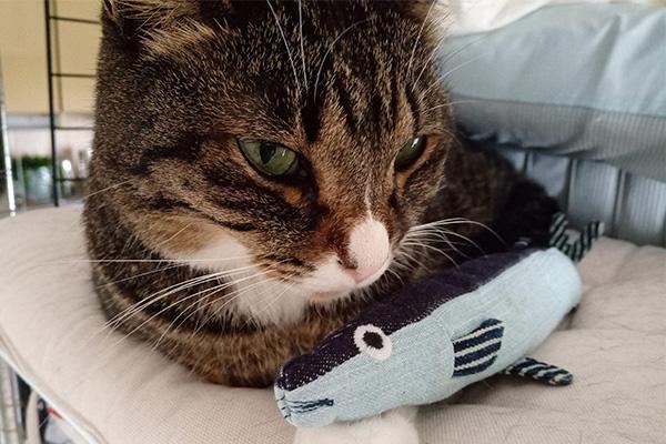 USEDo × 猫部 古着屋さんで見つけたような味わい深いデニムさかなの会と猫。