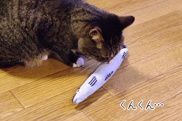 USEDo × 猫部 古着屋さんで見つけたような味わい深いデニムさかなの会の匂いをかいでいる猫。