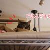 猫ちゃんの冬ベッドに最適!2018年ドーム型ランキングを調べてみたよ。