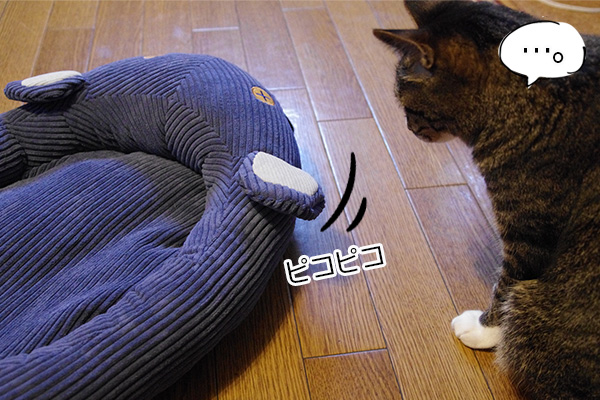 フェリシモ猫部のネズミさんベッドの耳を見つめる猫。