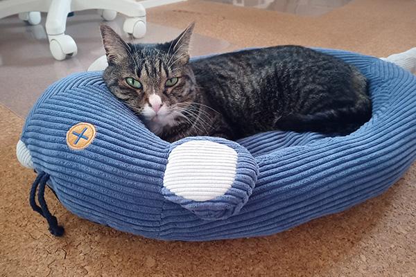 フェリシモ猫部のネズミさんベッドを3.2キロの猫が使っている様子。