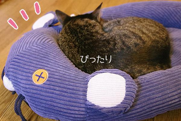 フェリシモ猫部のネズミさんベッドに身をゆだねる猫。