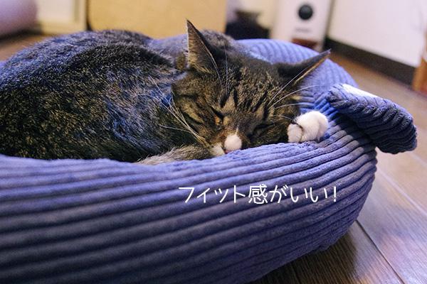 フェリシモ猫部のネズミさんベッドのふちに寄り添うのが好きな猫。