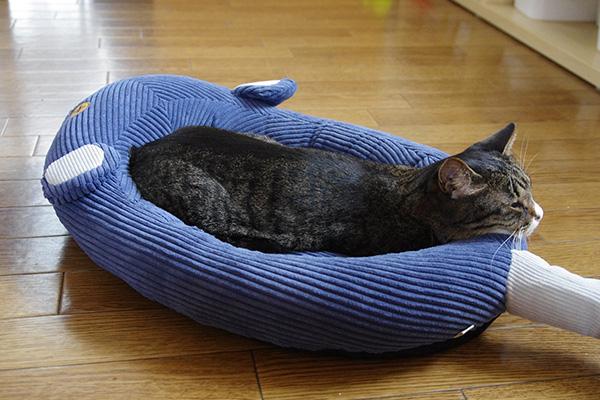 フェリシモ猫部のネズミさんベッドを3キロの猫が使うとお尻側があごのせにちょうどいいサイズ感です。
