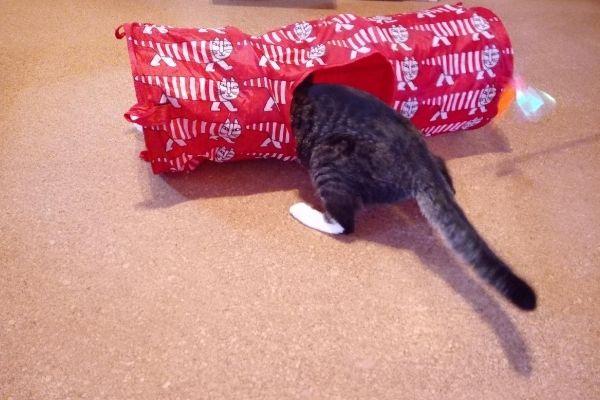 雑誌ねこのきもち入会特典のリサラーソンかくれんぼトンネルの穴に入っている猫