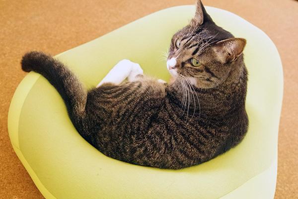 MOGUクッションシットジョイに座る猫